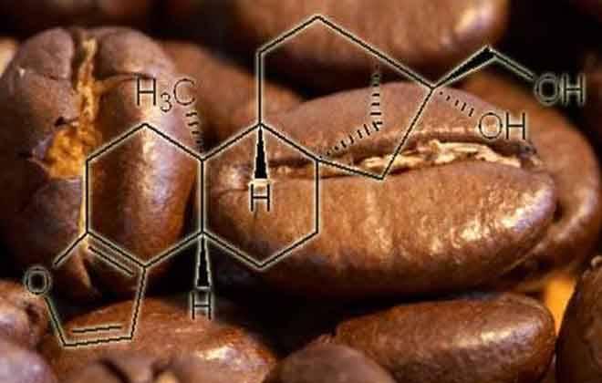 зеленый кофе и холестерин