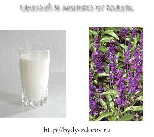 Кашель народные средства молоко шалфей