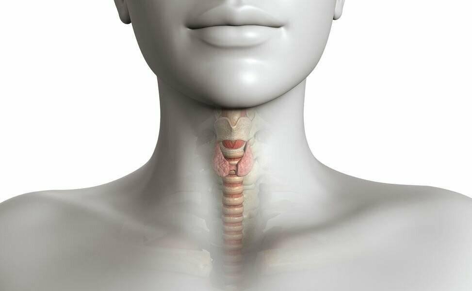 Беременность и щитовидная железа: гипотиреоз и другие заболевания