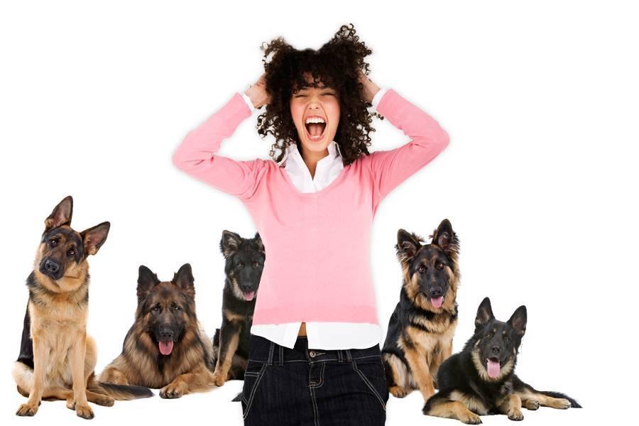 Как называется боязнь собак, причины появления и способы избавления от фобии