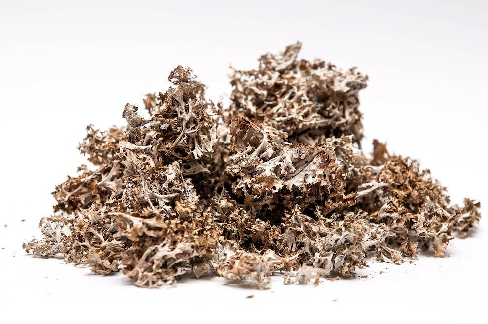 исландский мох применение при кашле