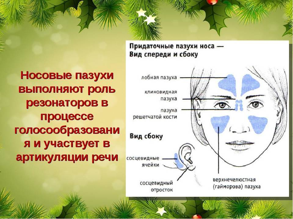решетчатая пазуха носа