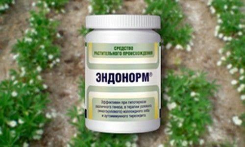 Лапчатка белая, корень. применение, лечение щитовидной железы. как приготовить, принимать настой, противопоказания