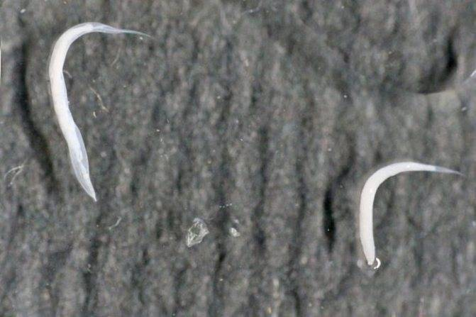 Комаровский о глистах у детей — parazit24