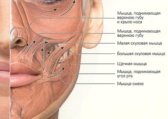 Онемение части носа