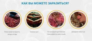 Как можно заразиться глистами