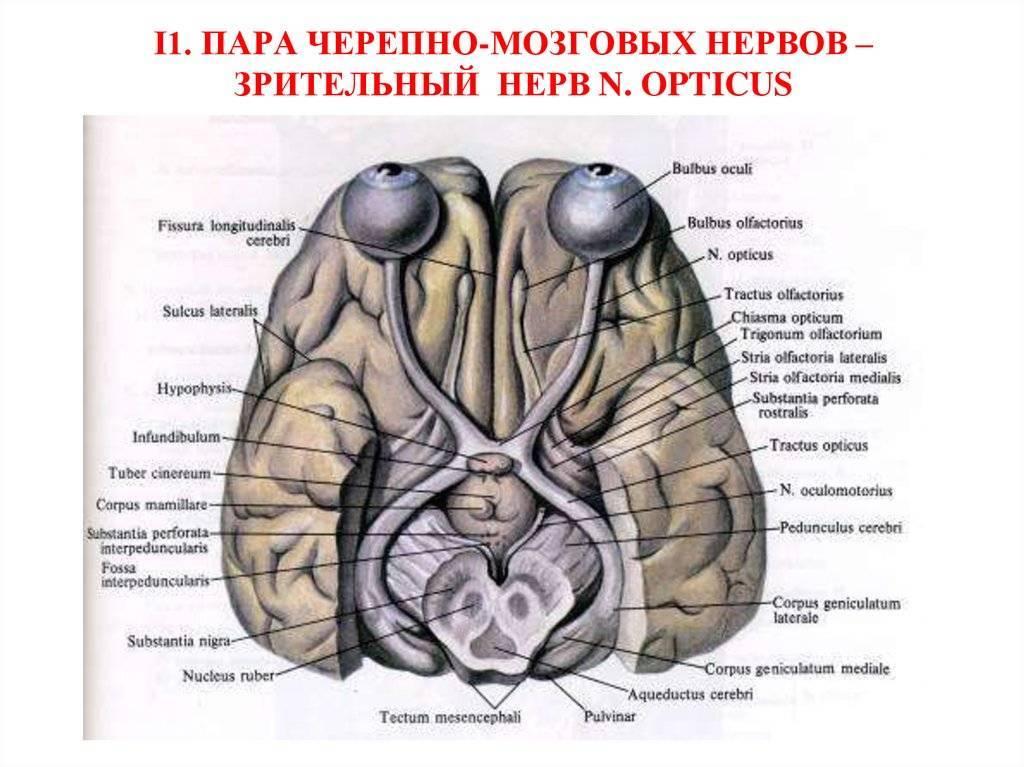 Причины повреждения зрительного нерва