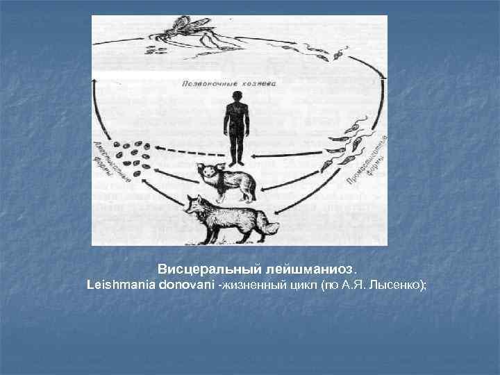 Что такое кожный лейшманиоз?