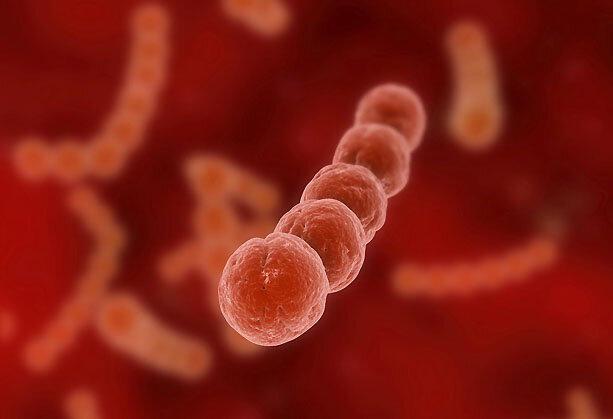 Streptococcus pyogenes: характеристика, что вызывает, симптомы, лечение