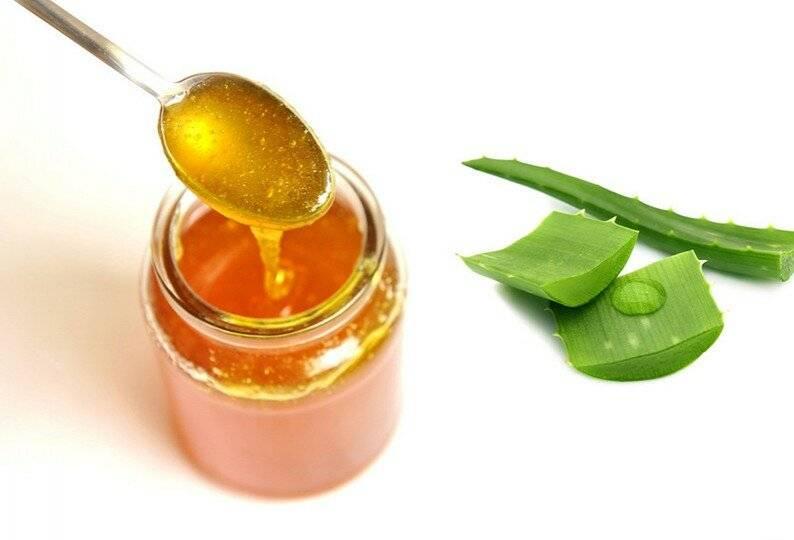 Алоэ с медом: свойства и рецепты для желудка, от кашля и других проблем