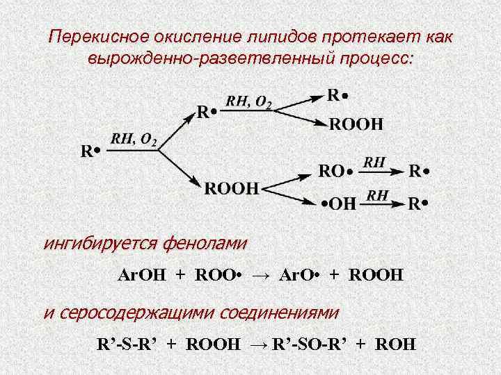 окисление белков и липидов