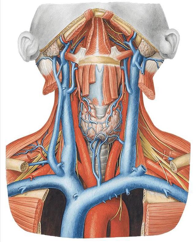 щитовидная железа 5 см