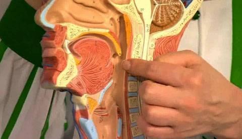 10 проверенных способов быстро избавиться от слизи в горле :: инфониак
