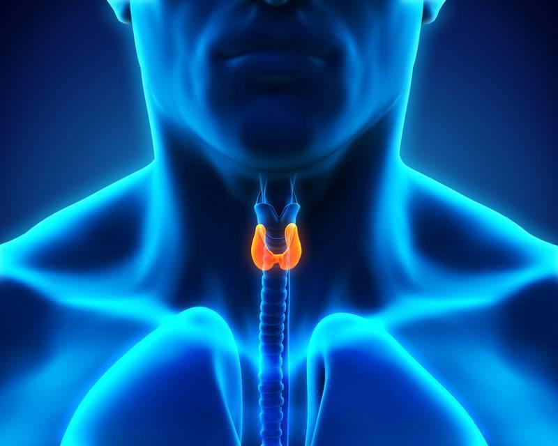 менопауза и щитовидная железа