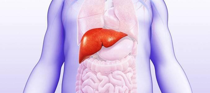 Ожирение печени: что это такое, причины и как лечить (лекарства, диеты, народные средства)