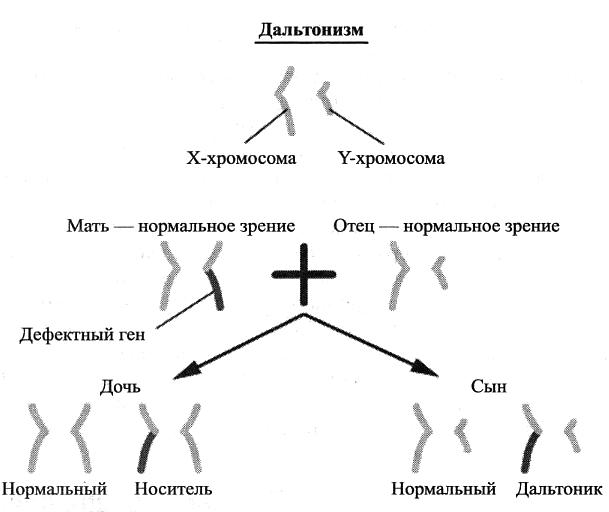 дальтонизм передается по наследству