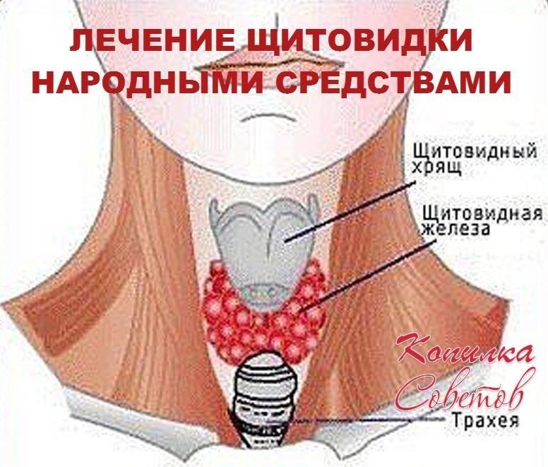 заболевание щитовидной железы симптомы лечение народными средствами
