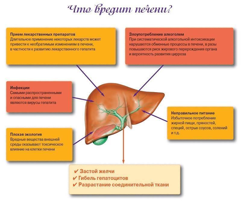 Список лучших гепатопротекторов при гепатите с