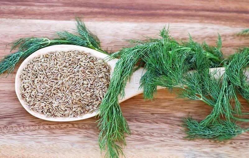 Укроп при цистите: польза и ограничения для женщин и мужчин, а также как заварить, в каких количества можно принимать для лечения, как пить настой из семян?