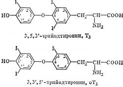 Гормон т3 свободный - функции и норма