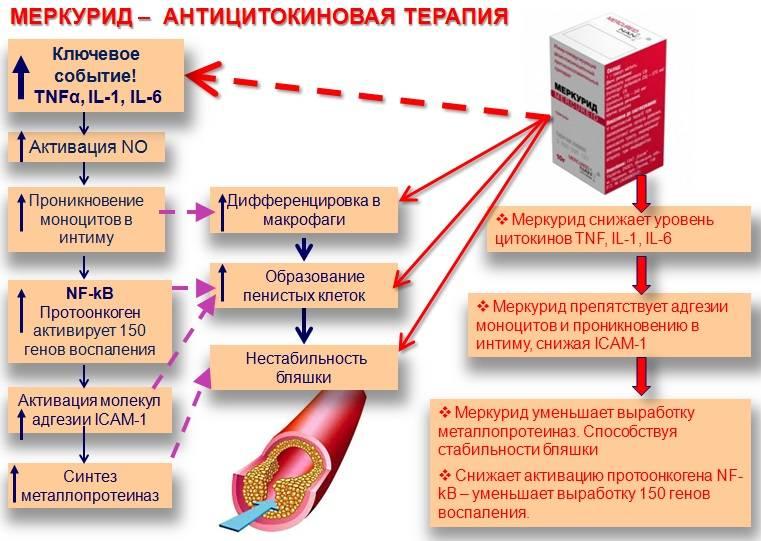Причины, симптомы и лечение атеросклероза
