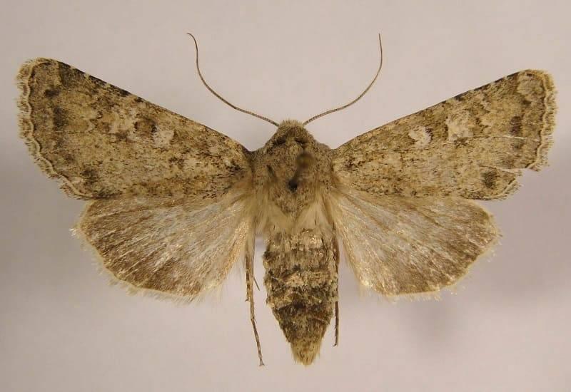 Почему люди боятся насекомых: как лечить страх инсектофобии или энтомофобии