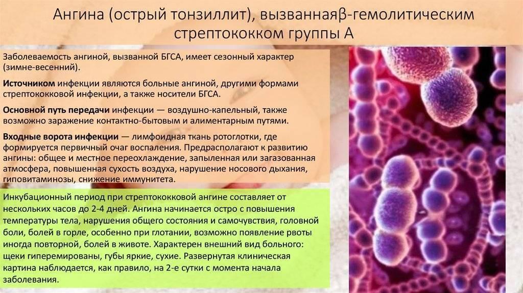 Инкубационный период ангины у детей и взрослых