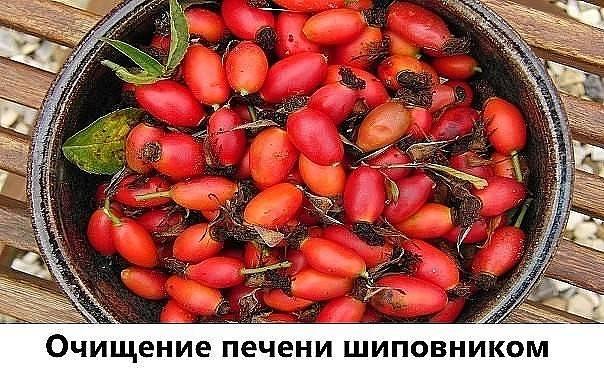 Лечение печени шиповником: 4 рецепта в домашних условиях - lechilka.com