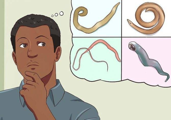 Паразиты в желудке — parazit24