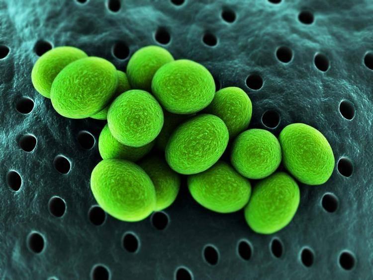 Уреаплазмы у женщин – признаки инфекции, причины и методы лечения