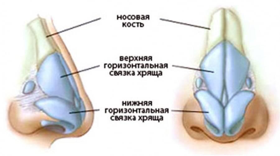 Наружный нос и полость носа