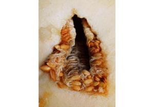 вагинальные черви