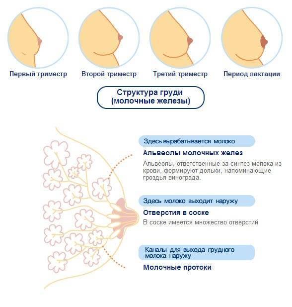 боль в молочных железах причины