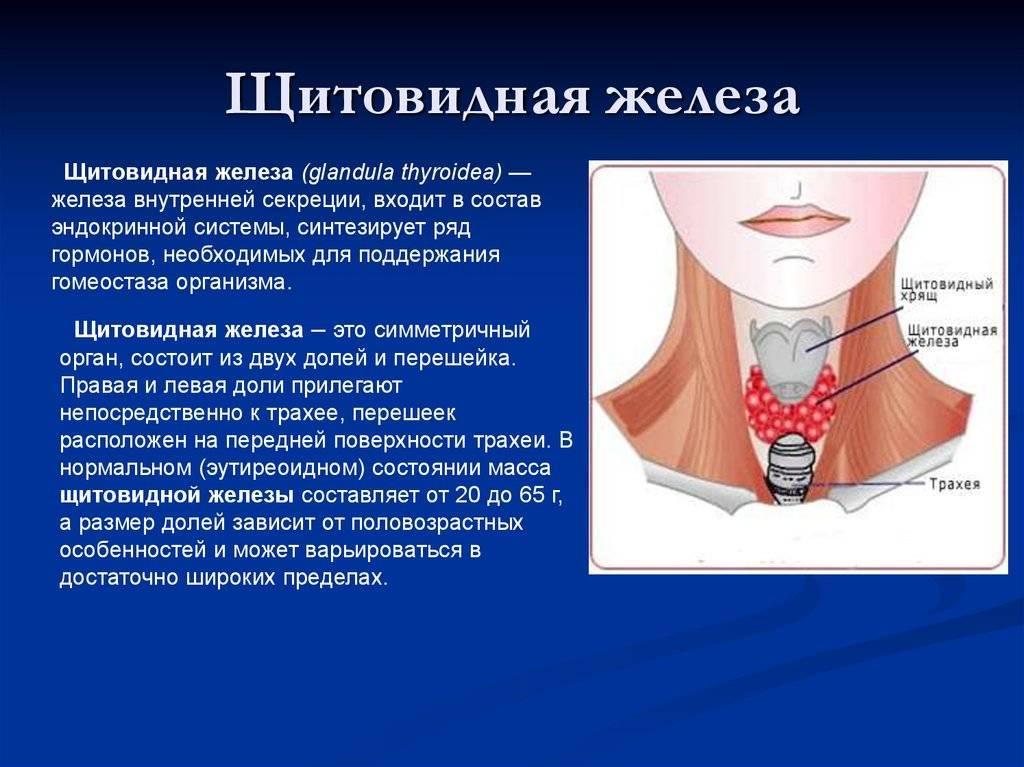 Левая доля щитовидной железы