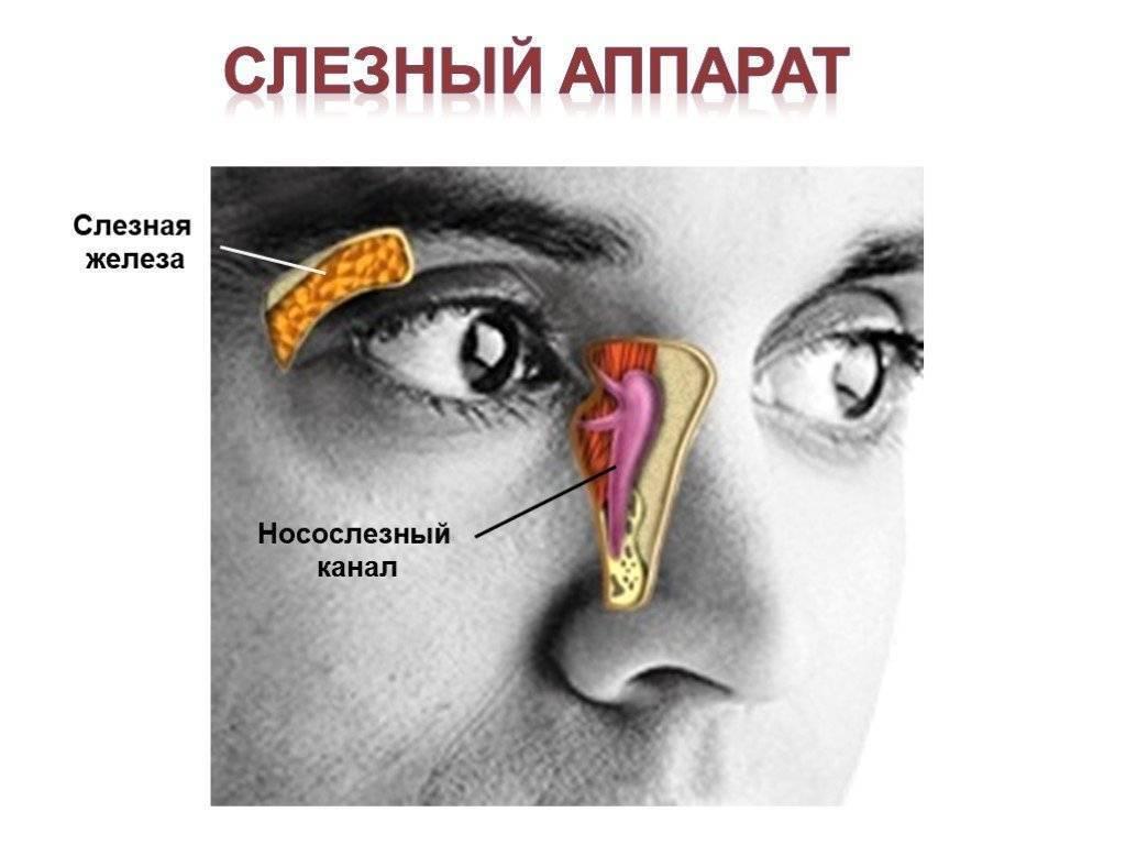 Воспаление слезного канала – особенности заболевания, причины и эффективные методы лечения