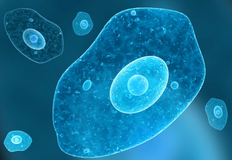 Амебиаз: причины, симптомы, диагностика, лечение и профилактика
