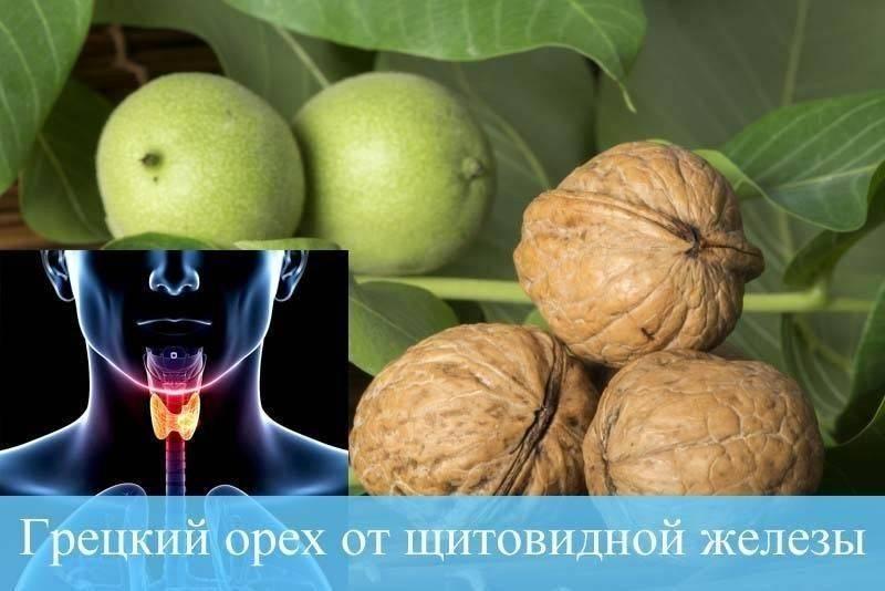лечение щитовидки зелеными грецкими орехами