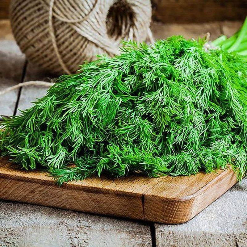 Как используют семена укропа при цистите?