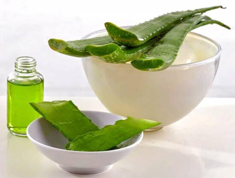 Положительный эффект лечения соком алоэ при гайморите