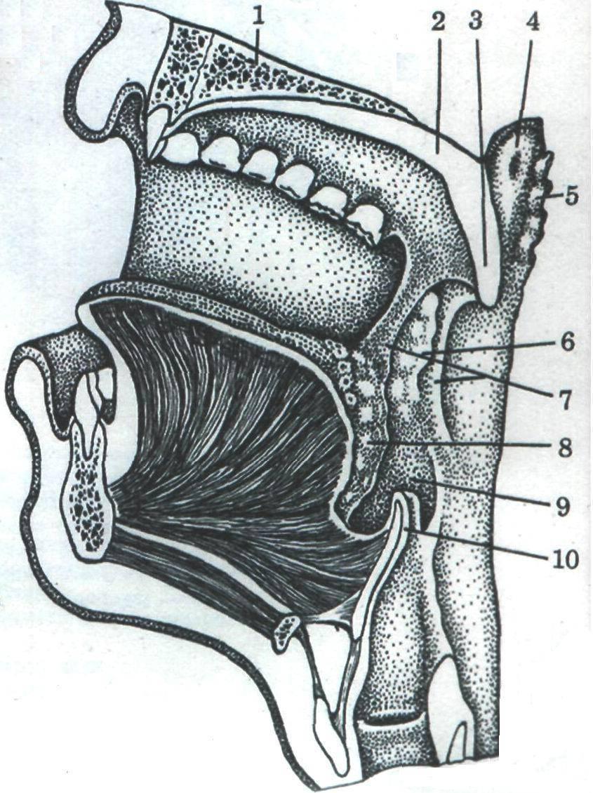 Разрастание язычной миндалины