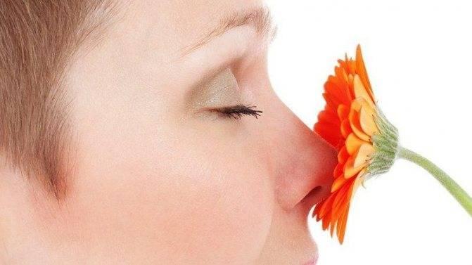 почему нос не чувствует запахов