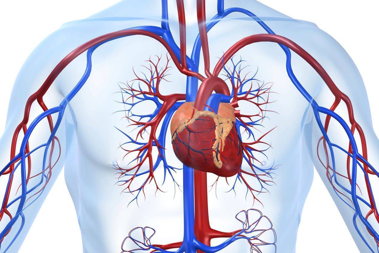 Что же такое атеросклеротический кардиосклероз в ибс
