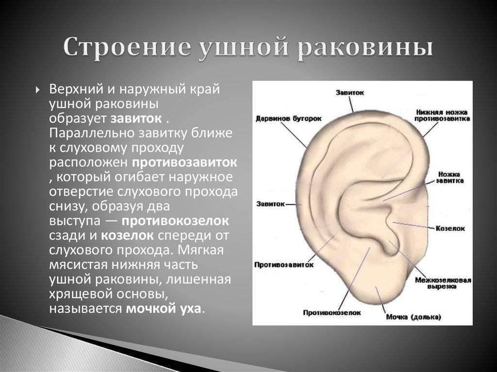 Болит ушная раковина снаружи при надавливании: причины, лечение
