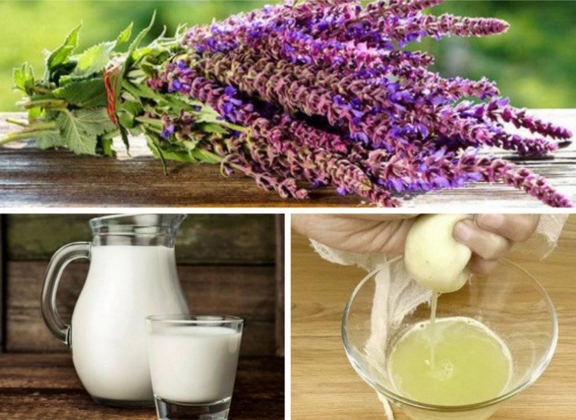 Шалфей с молоком — рецепты лекарственных средств от кашля, противопоказания