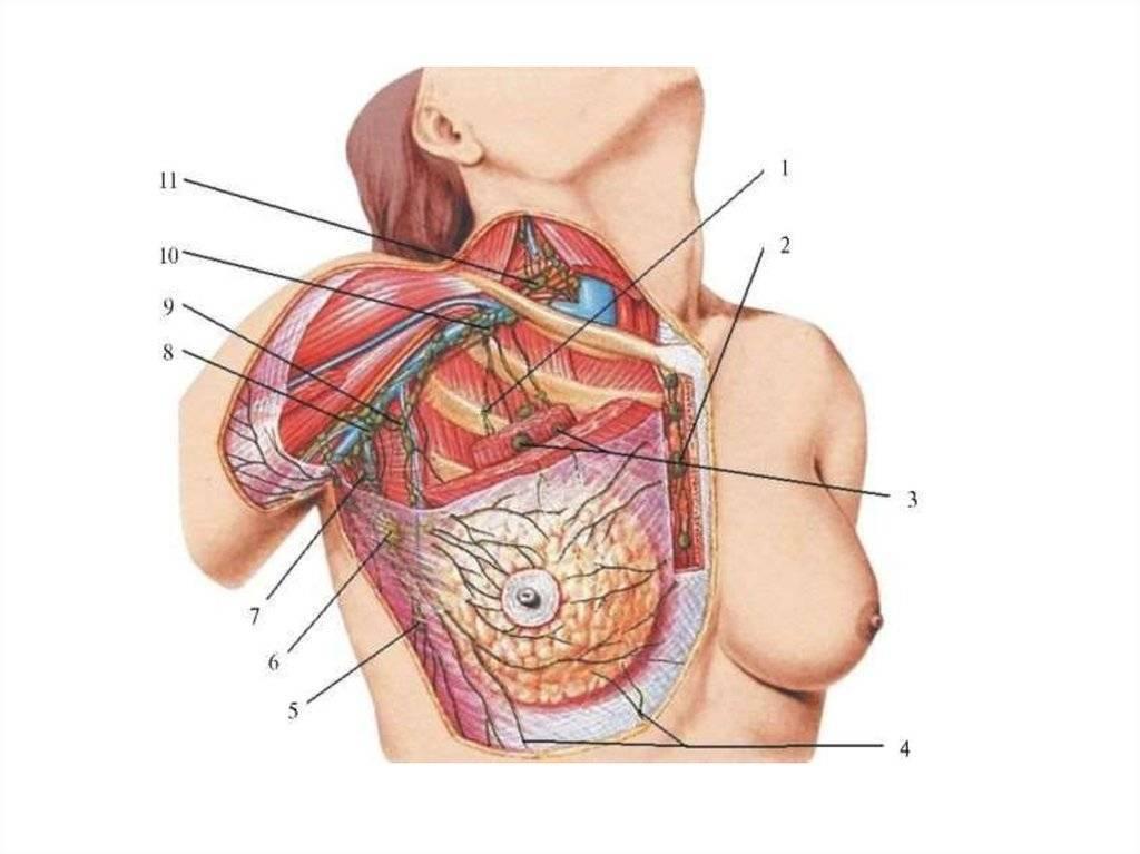 Мастопатия и лимфоузлы