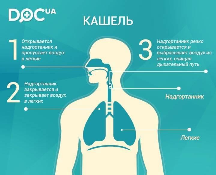 от чего бывает кашель кроме простуды