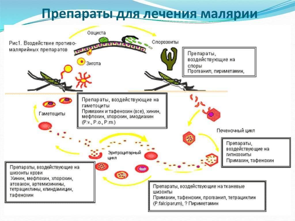 пути передачи малярии