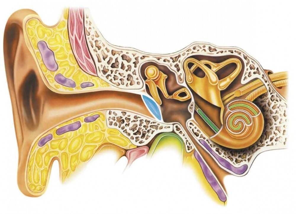 Отек уха: причины, лечение