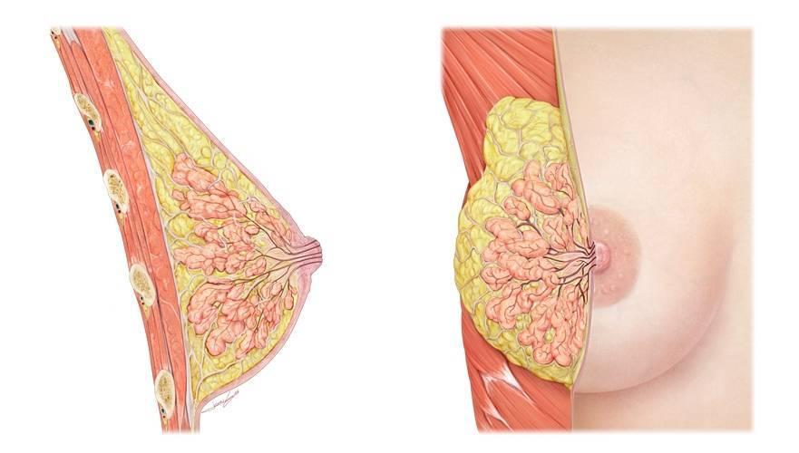 болит грудь от противозачаточных