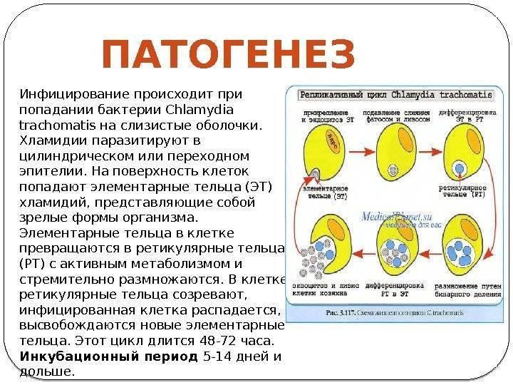 Хламидиоз у женщин: что это такое, пути заражения хламидией трахоматис, проявления, осложнения и диагностика хламидийной инфекции